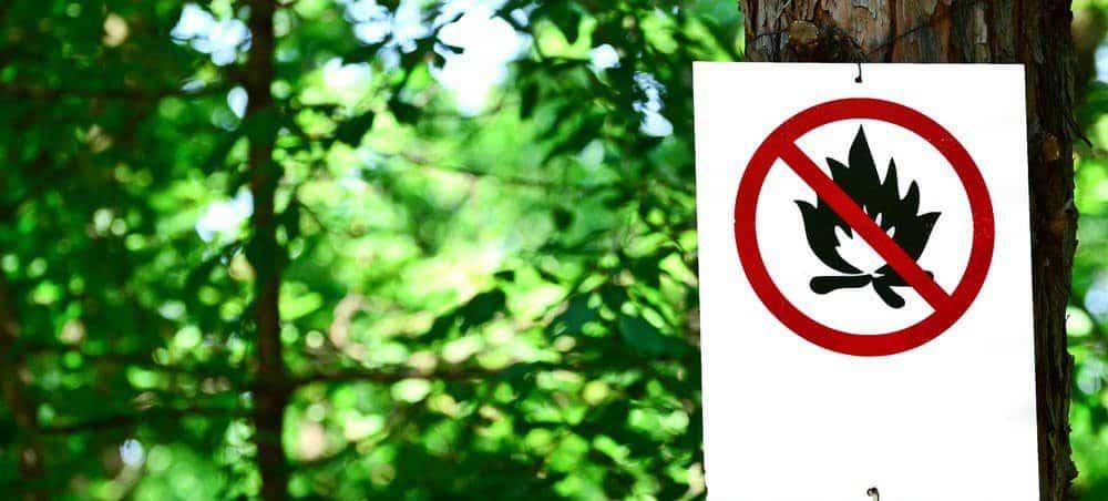 Штрафы за разведение костра | Можно ли сжигать мусор на своем участке