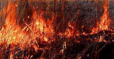 Можно ли сжигать мусор на своем участке