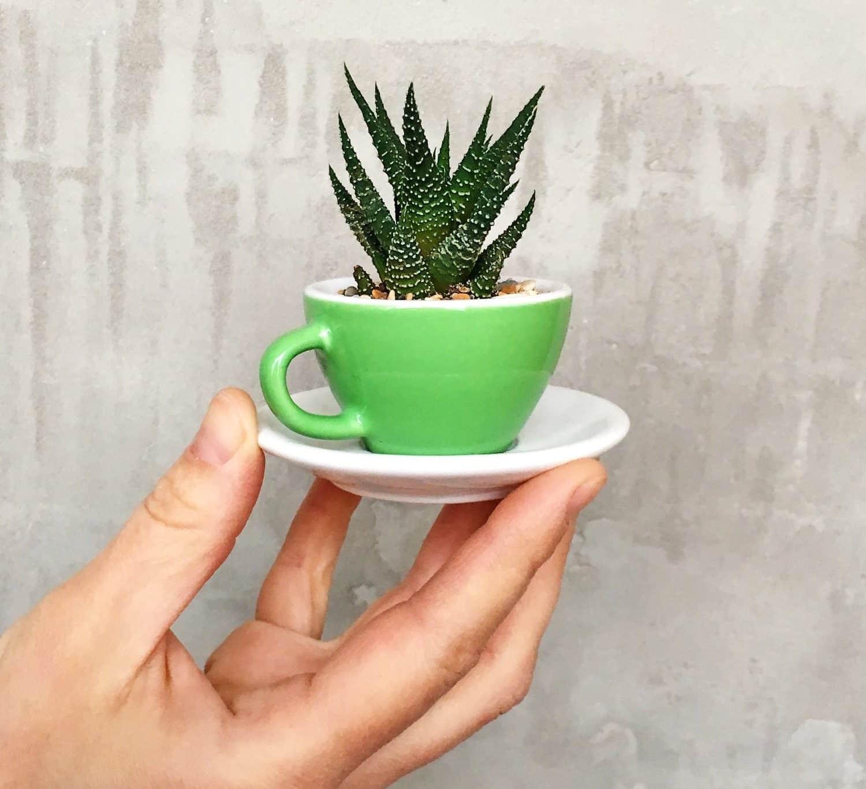Кактус в чашке своими руками