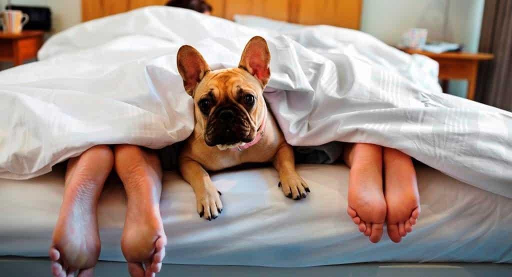 Как часто менять постельное белье при наличии домашних животных