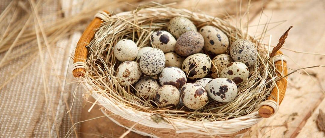 Домашний майонез на перепелиных яйцах | Как сделать домашний майонез густым. Как исправить майонез, если он получился жидким