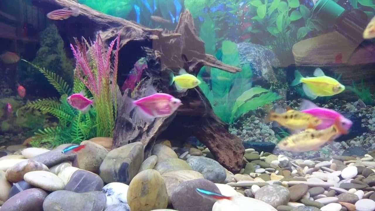 Сколько рыбок можно поместить в аквариум | Сколько рыбок можно держать в аквариуме