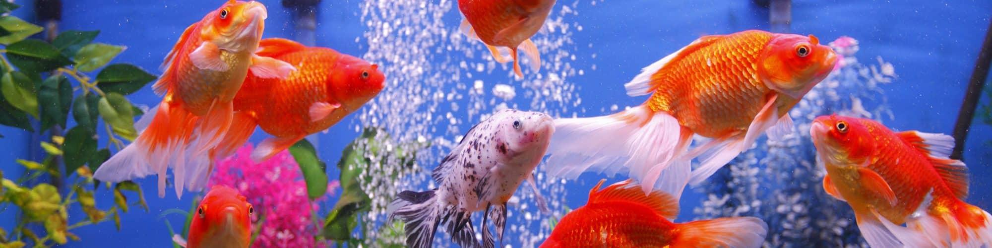 Сколько рыбок можно держать в аквариуме: 5, 10, 15, 20, 30, 40, 50, 60, 100, 150, 300, 1000 литров