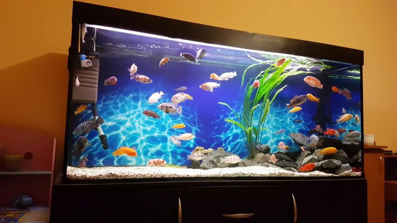 Сколько рыбок можно держать в аквариуме от 300 до 1000 литров