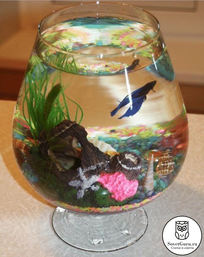 Сколько рыбок можно держать в маленьком аквариуме менее 5 литров | Сколько рыбок можно держать в аквариуме