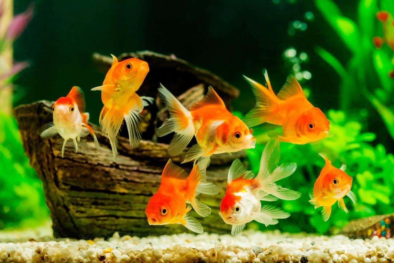 Расчет количества рыбок на объем аквариума | Сколько рыбок можно держать в аквариуме