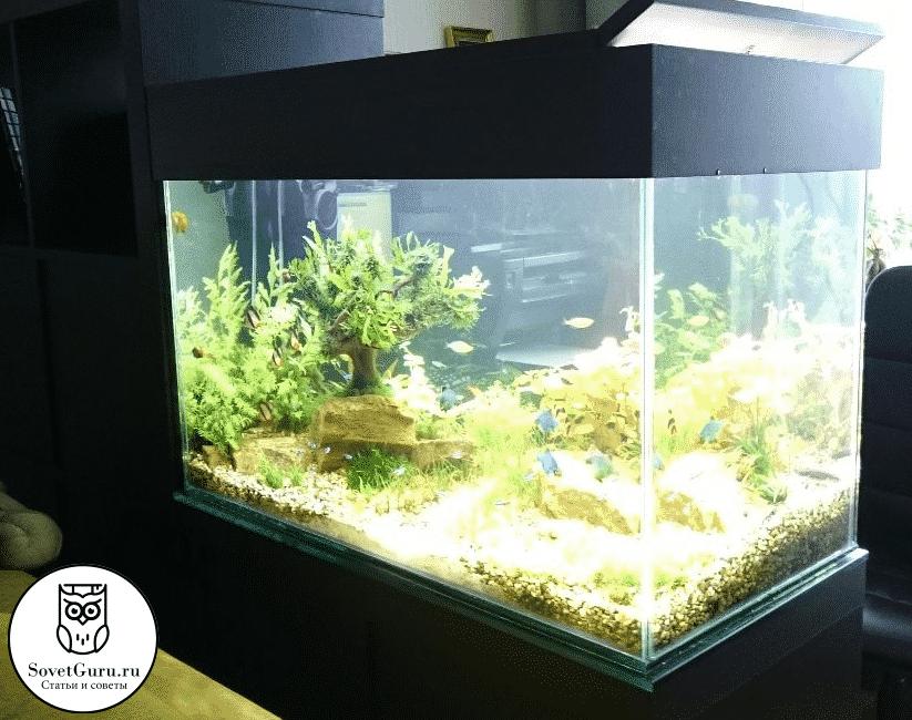 Сколько рыбок можно поселить в аквариуме 10 - 15 литров | Сколько рыбок можно держать в аквариуме