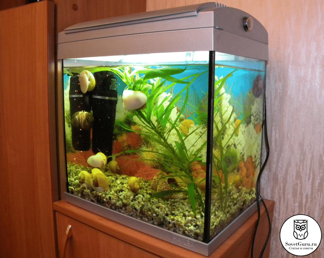 Сколько рыбок можно поселить в аквариум 30 литров | Сколько рыбок можно держать в аквариуме