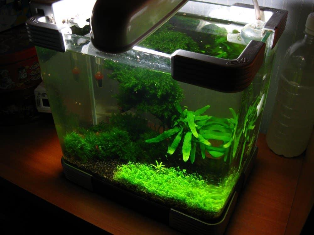 Сколько рыбок можно держать в аквариуме 5 литров | Сколько рыбок можно держать в аквариуме