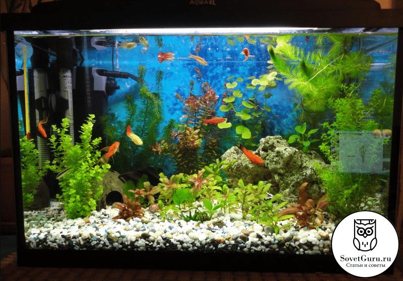 Сколько рыбок можно держать в аквариуме 60 - 100 литров