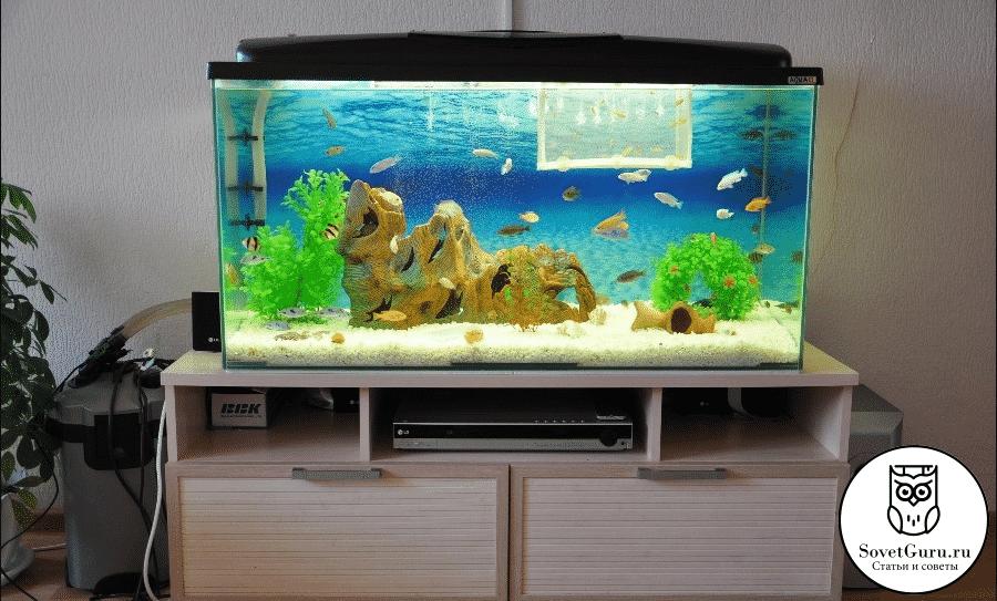 Сколько рыбок можно держать в аквариуме больше 150 литров