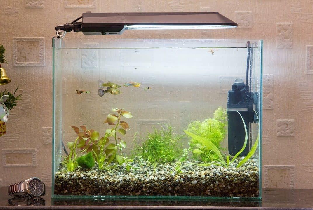 Сколько рыбок можно заселить в аквариум 20 литров | Сколько рыбок можно держать в аквариуме