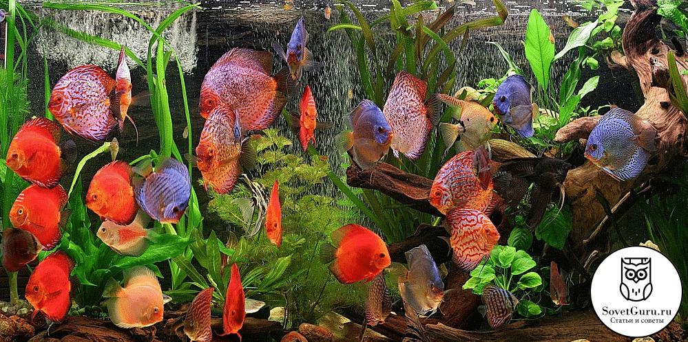 Чем грозит перенаселение аквариума | Сколько рыбок можно держать в аквариуме