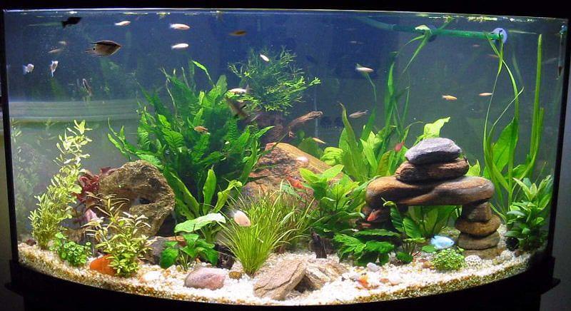 Сколько рыбок можно держать в аквариуме 40 литров