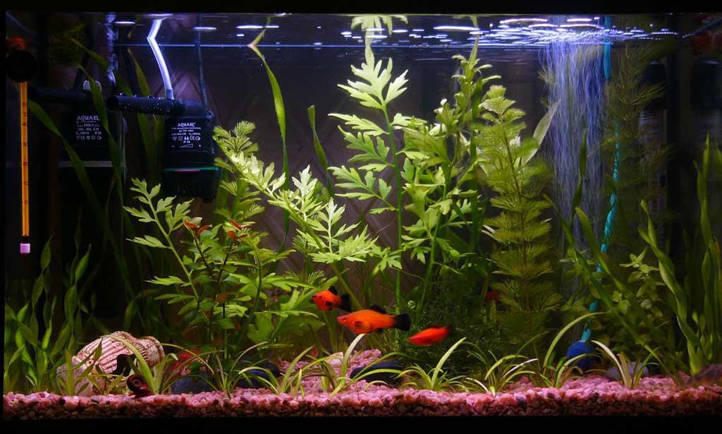 Сколько рыбок можно держать в аквариуме 50 литров